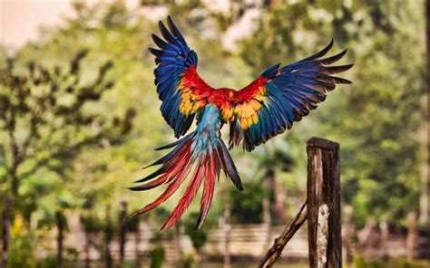 Download wallpapers 4k, Flying Macaw, bokeh, HDR, parrots
