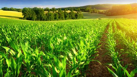 Data: The Fertilizer that will feed Africa's Agricultural
